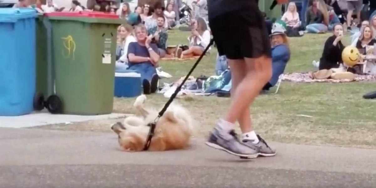 """Cuando estás demasiado entretenido en el parque y no te quieres ir: El tierno perro que encantó a todos con su """"pataleta"""""""