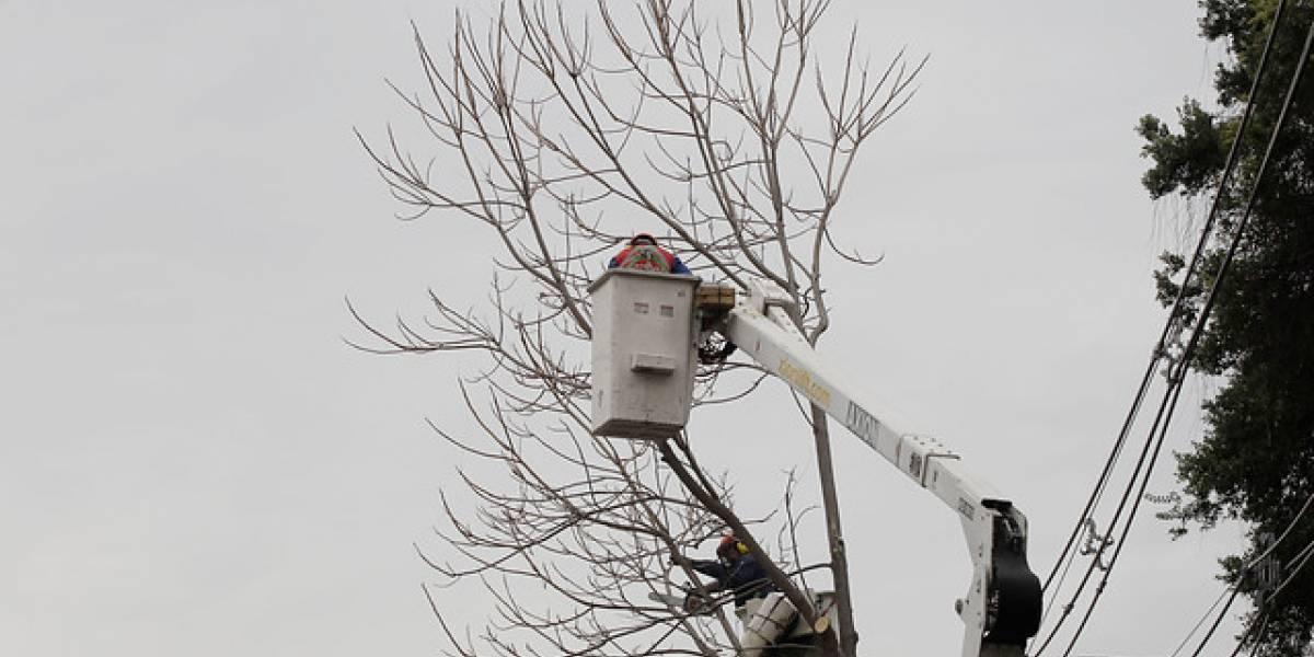 Fiscalizan plan de poda de árboles de empresas eléctricas ante pronóstico de lluvias
