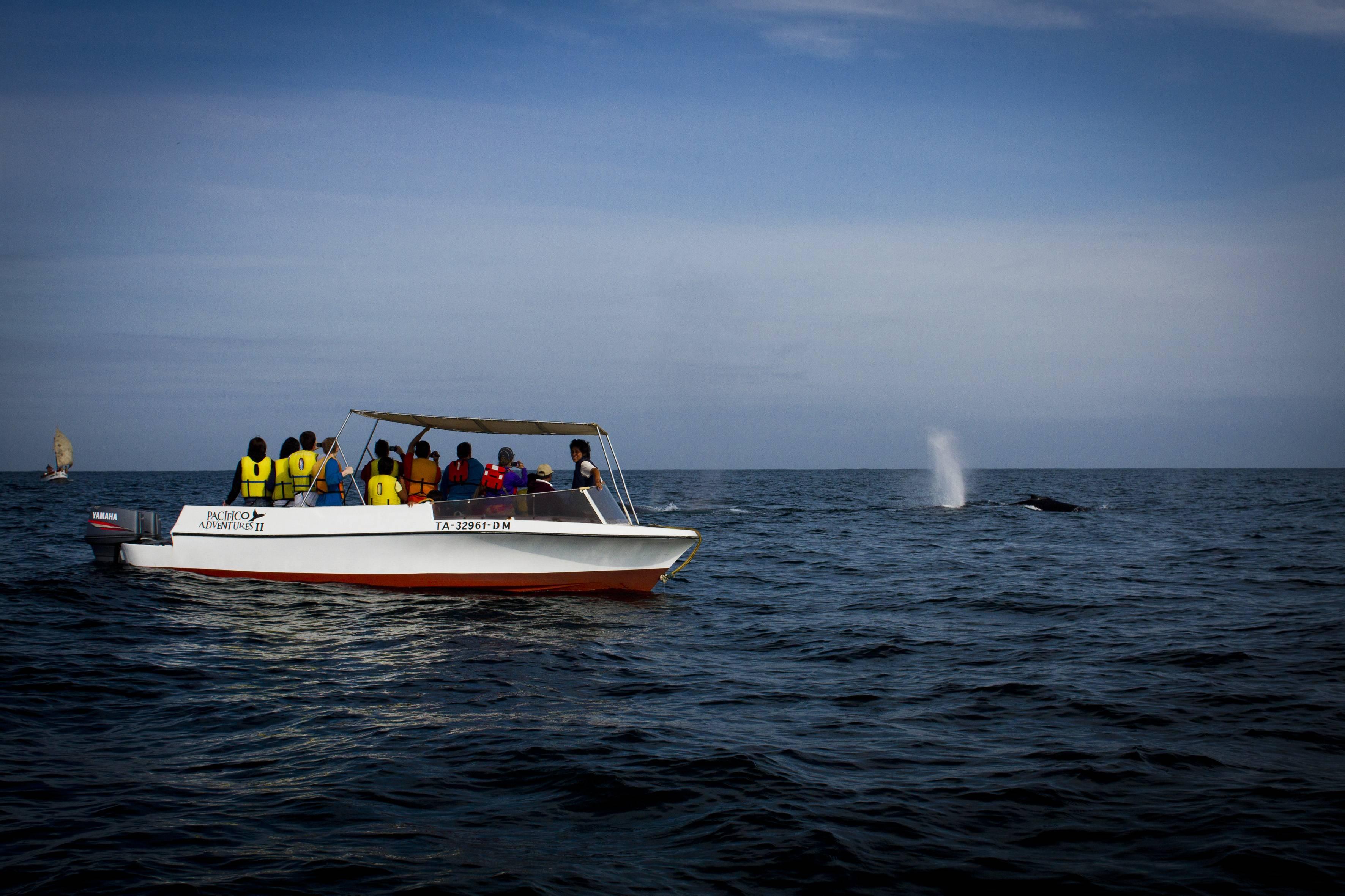PromPeru Ver ballenas
