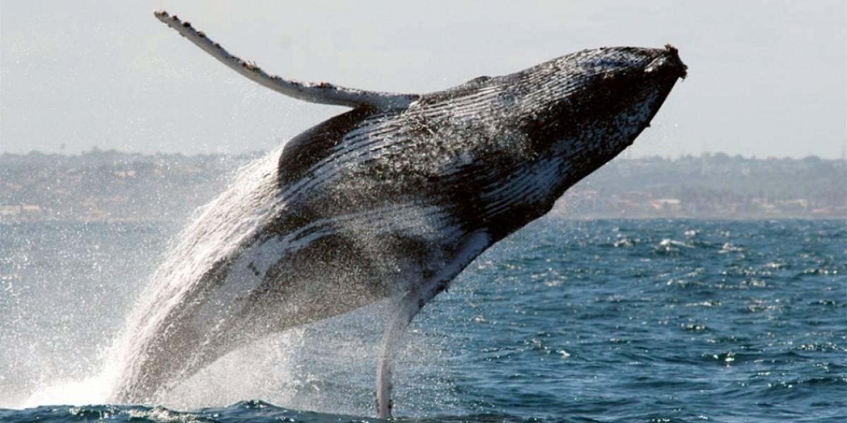Baleia salta em barco e deixa ao menos 7 feridos na Austrália