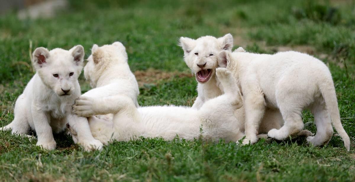 São quatro fêmeas e um macho | David W Cerny/ Reuters