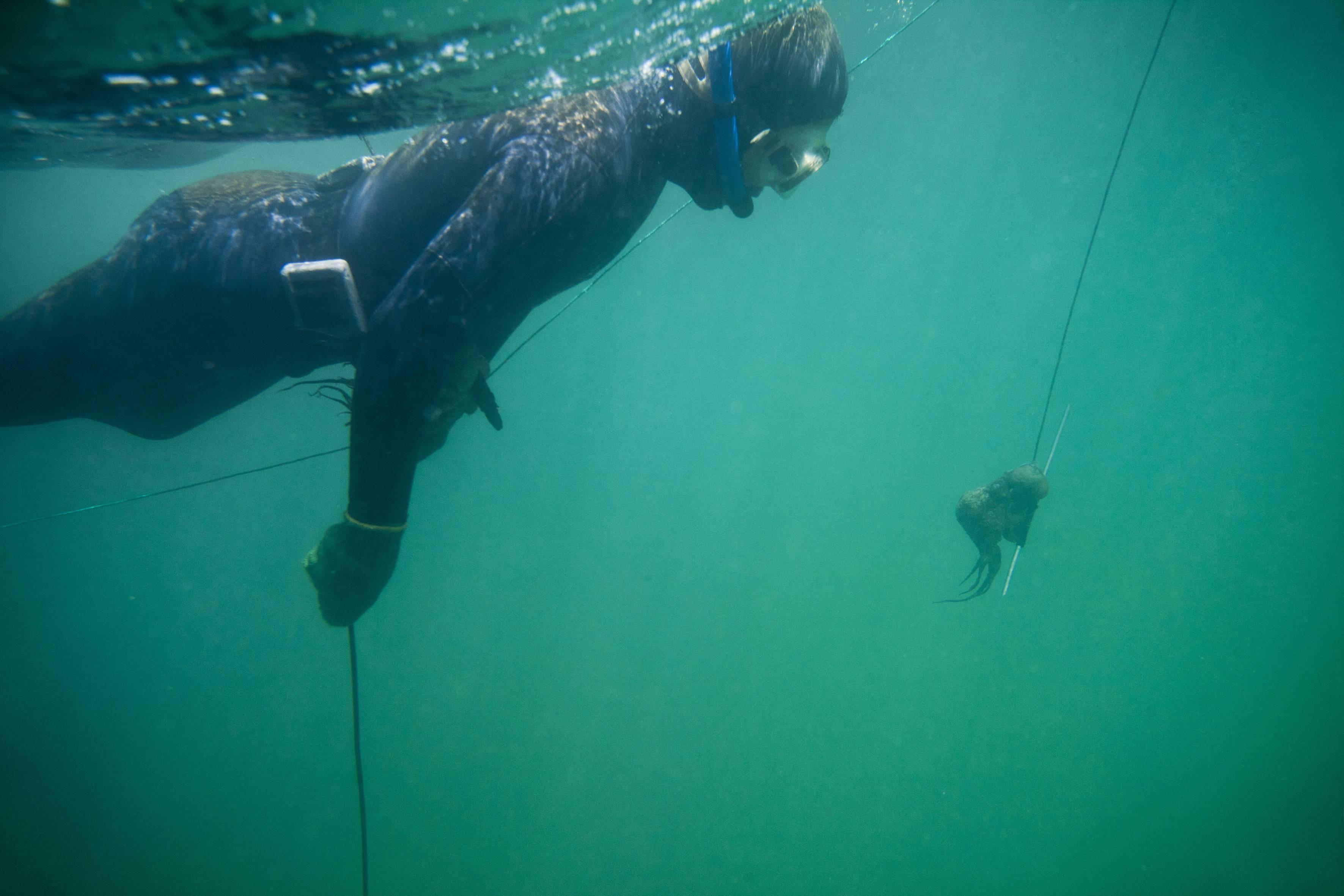 PromPeru Pesca submarina