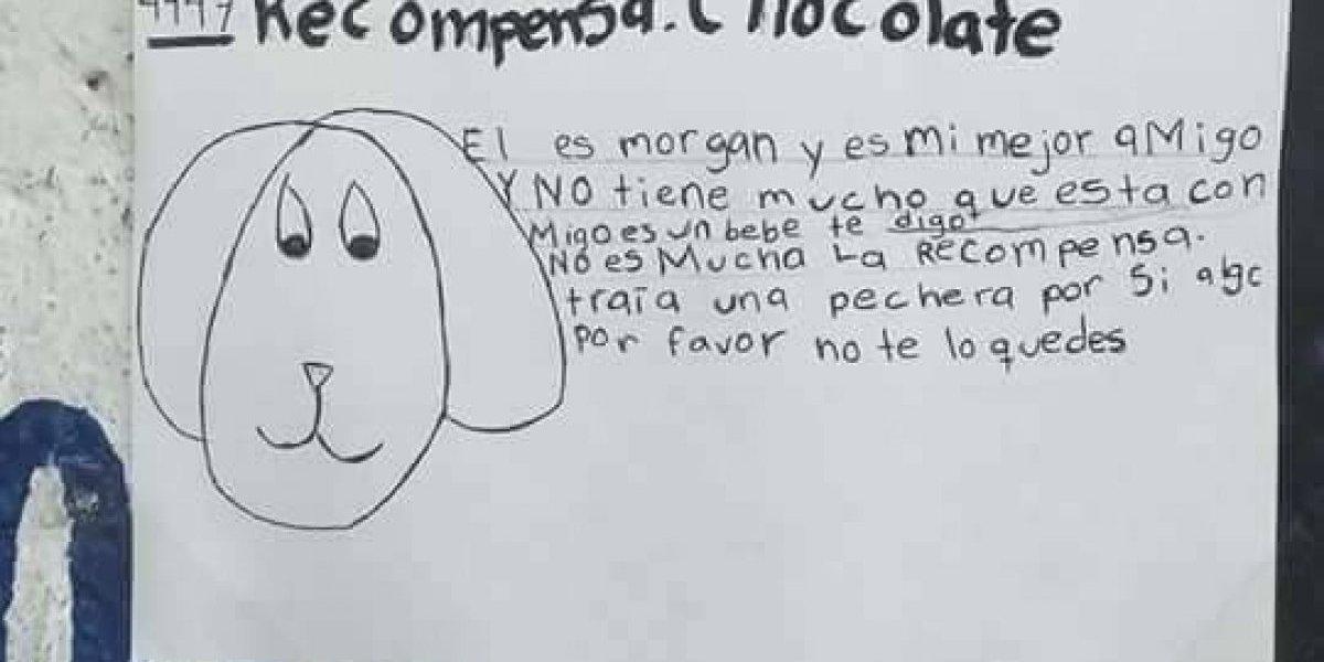 Apareció 'Morgan', el perrito cuyo dibujo se volvió viral