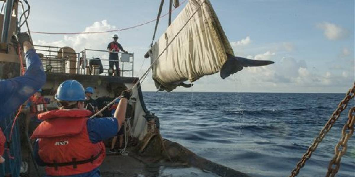 Ballena vuelve al mar después de rehabilitación en SeaWorld