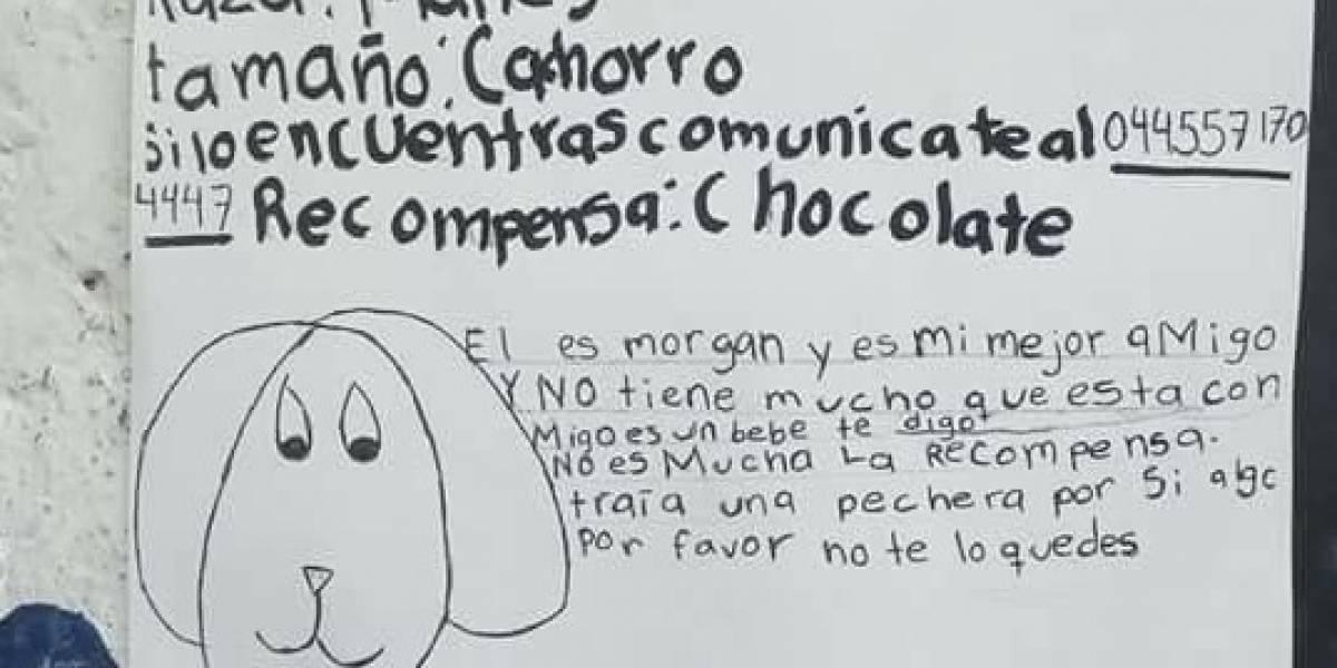 Niña encuentra a su perrito perdido tras dibujar tierno cartel de búsqueda y ofrecer