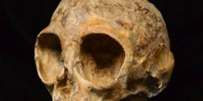 Crânio de 13 milhões de anos revela dados de evolução humana