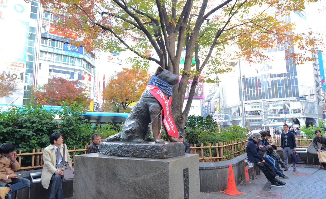 Shibuya. Dreamstime