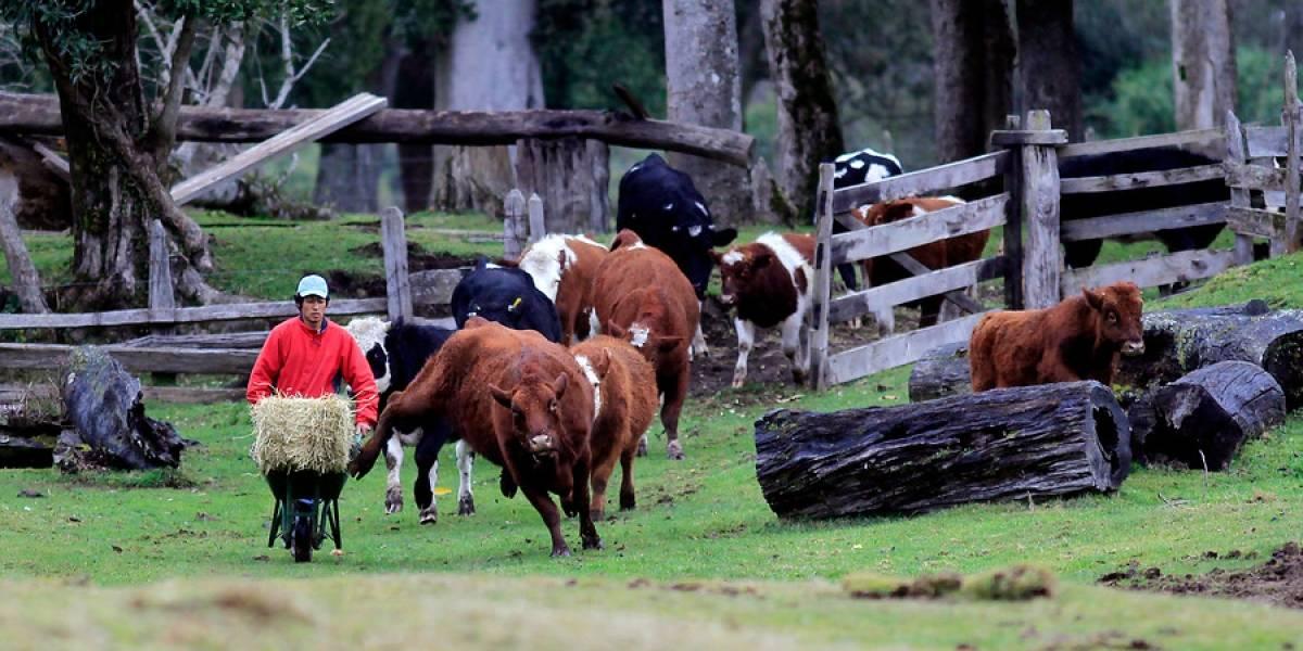 Productores lácteos de Valdivia introducen denuncia contra supermercados