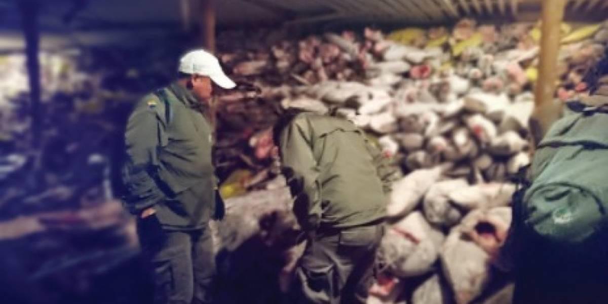 Detienen en Galápagos a barco chino con 300 toneladas de especies protegidas