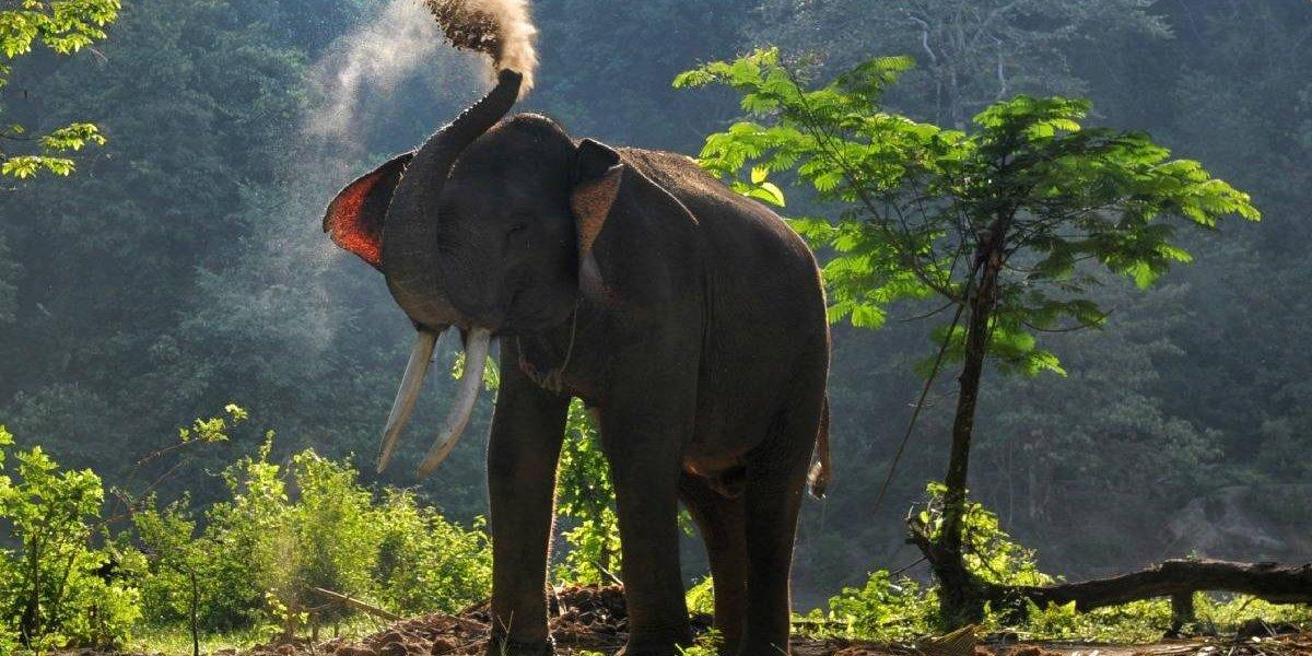 Un elefante mata a un cazador argentino en Namibia
