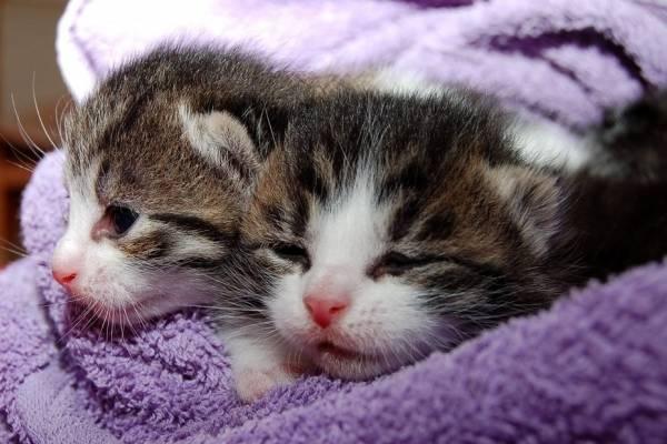 La clonación de mascotas pronto será una realidad