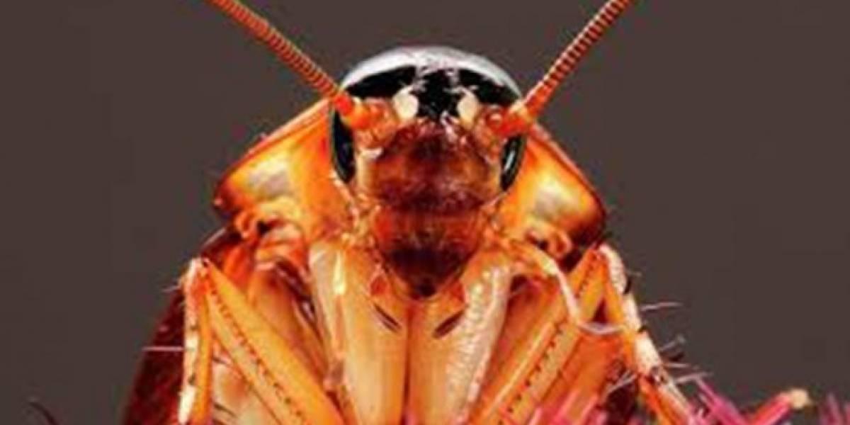 Extraen una cucaracha viva del cráneo de una mujer en la India