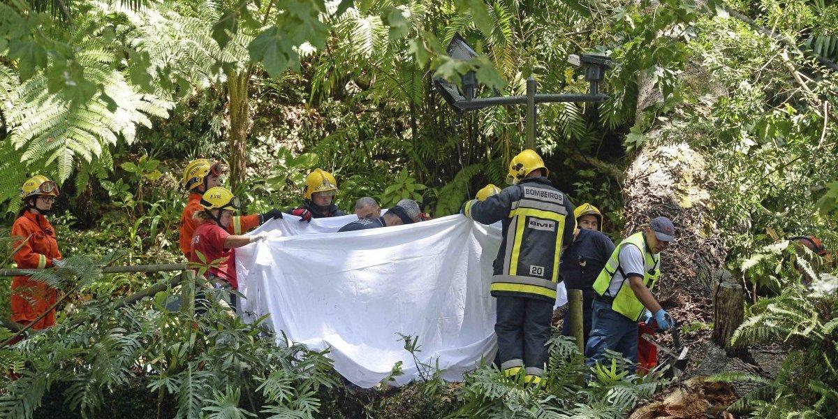 Enorme árbol cae sobre multitud en Portugal y mata a 13 personas