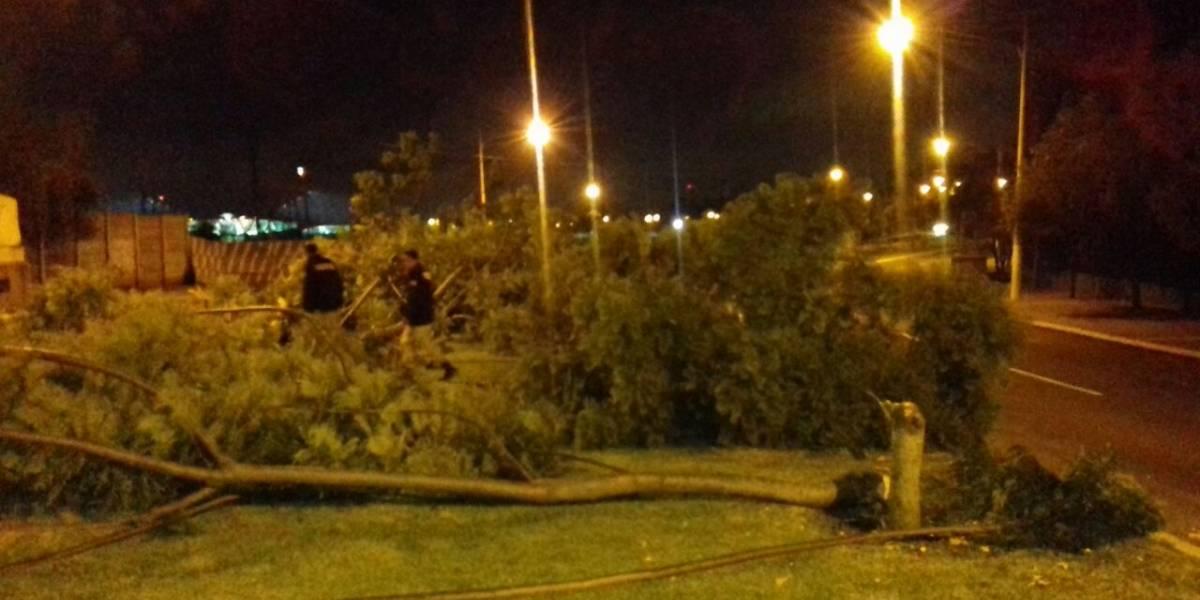 Capturan a personas que talaban árboles ilegalmente en el bulevar Juan Pablo II