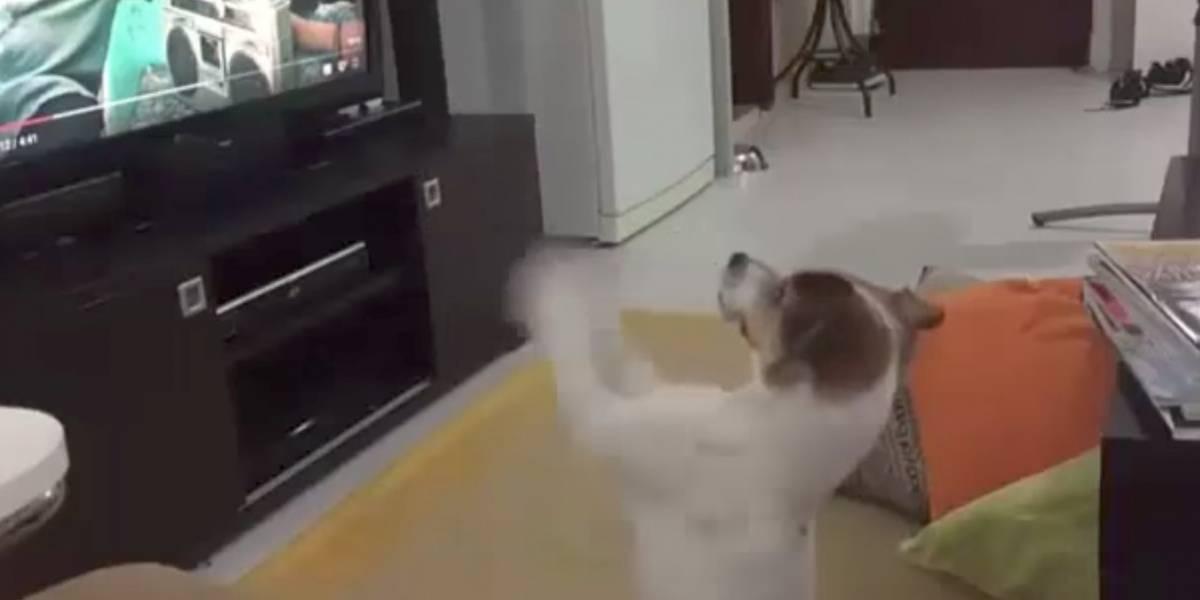 Reacción de un perro al escuchar 'Despacito' se vuelve viral