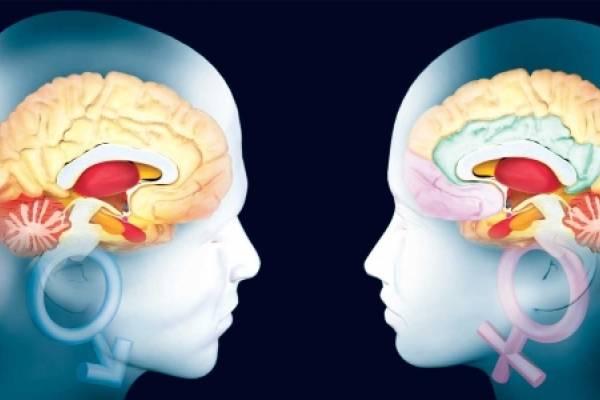 Confirmado: el cerebro de la mujer es más activo que el del hombre