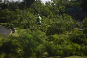 Jacarandas taladas en zona 13