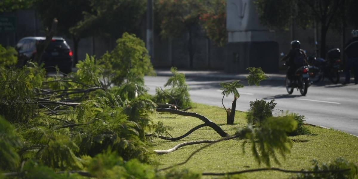 MuniGuate convoca a reforestar bulevar Juan Pablo II tras tala de jacarandas