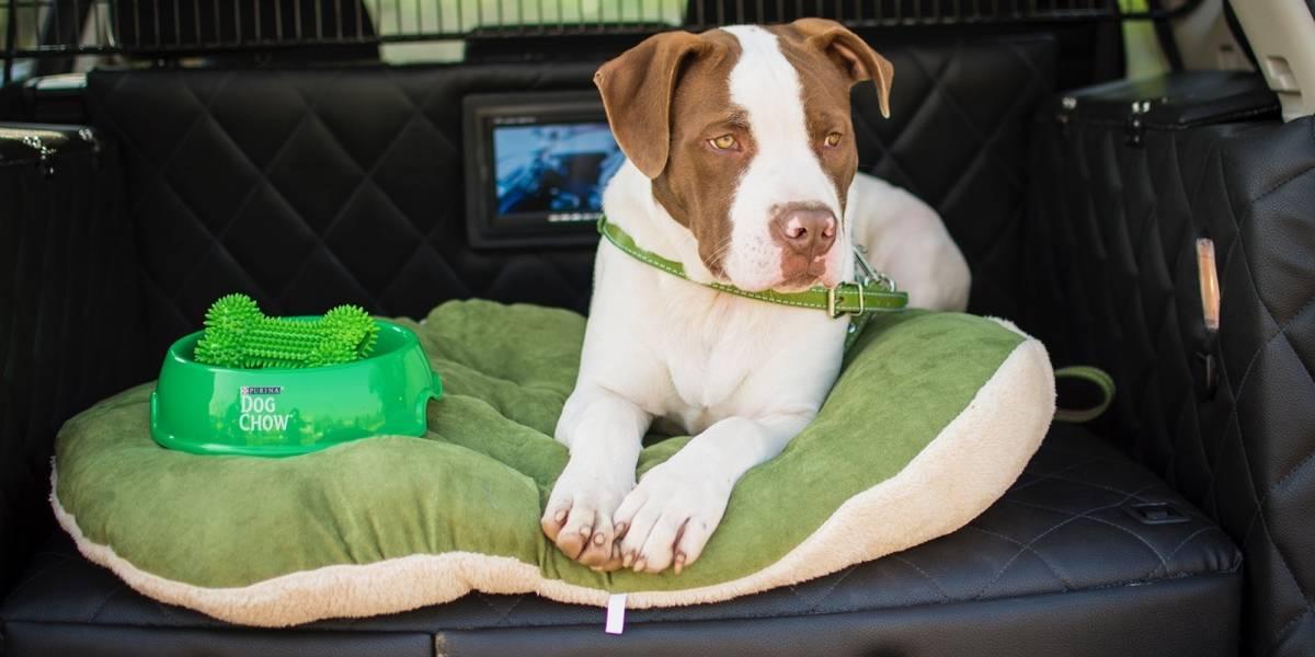 Sortean una Nissan X-Trail con equipamiento especial para perros