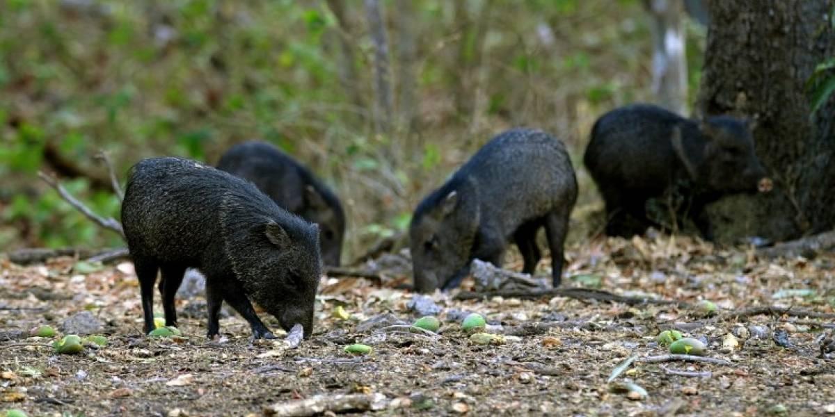 Venezolanos roban animales de  zoológicos para comérselos