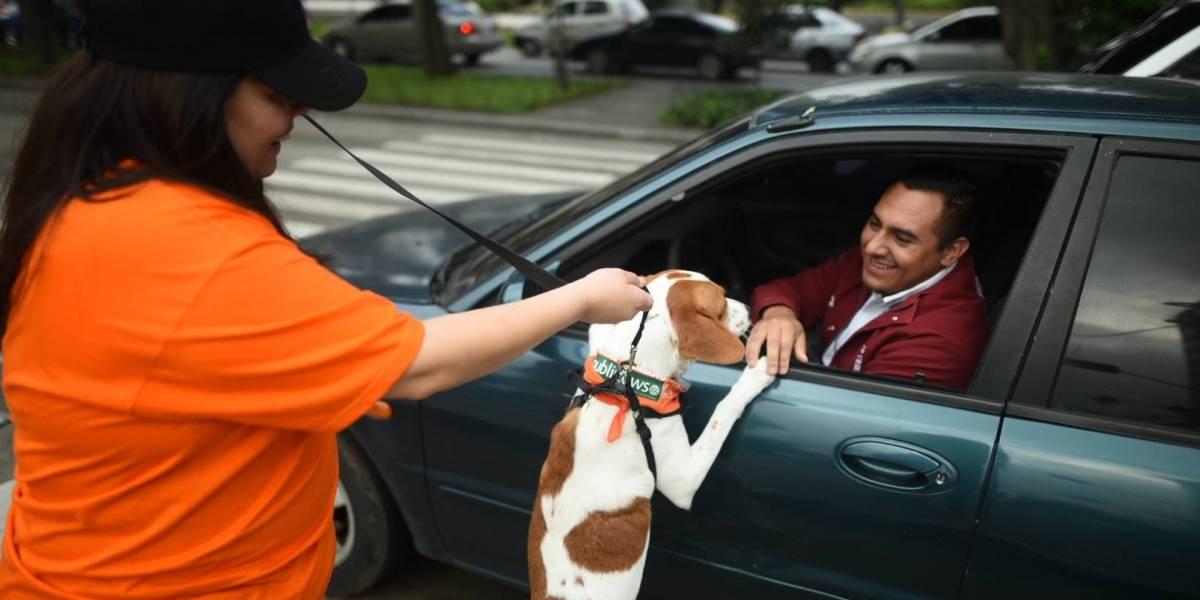 ¡Súmate al Día Perruno!, tú y tu perro pueden hacer el cambio