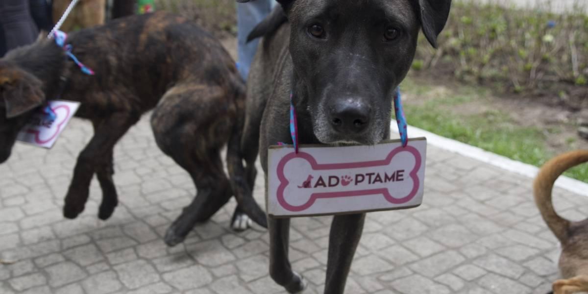 Adoptare, la plataforma mexicana para dar hogar a perros y gatos