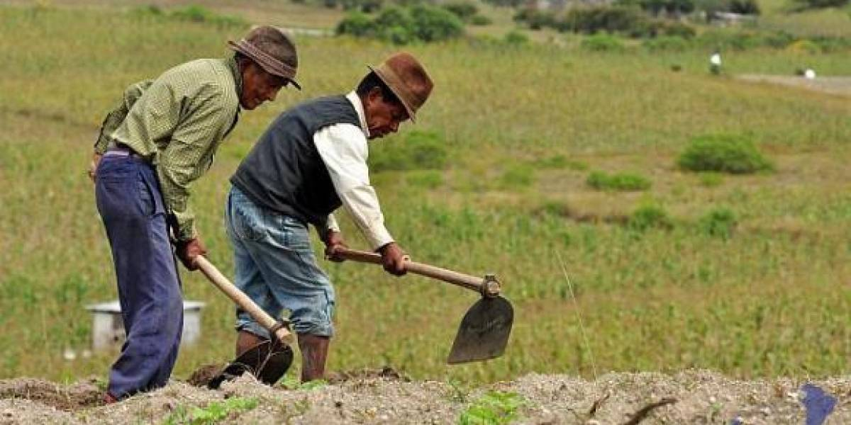 Gobierno destinará unos USD 2.560 millones para la Gran Minga Nacional Agropecuaria