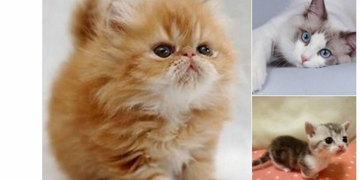 Tras atentado en Barcelona, ¿por qué surgen gatos en redes sociales?