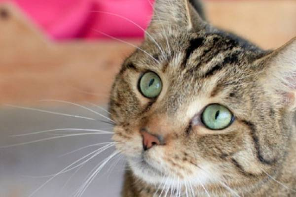 ¿Por qué las redes se llenaron de gatos después del ataque en Barcelona?