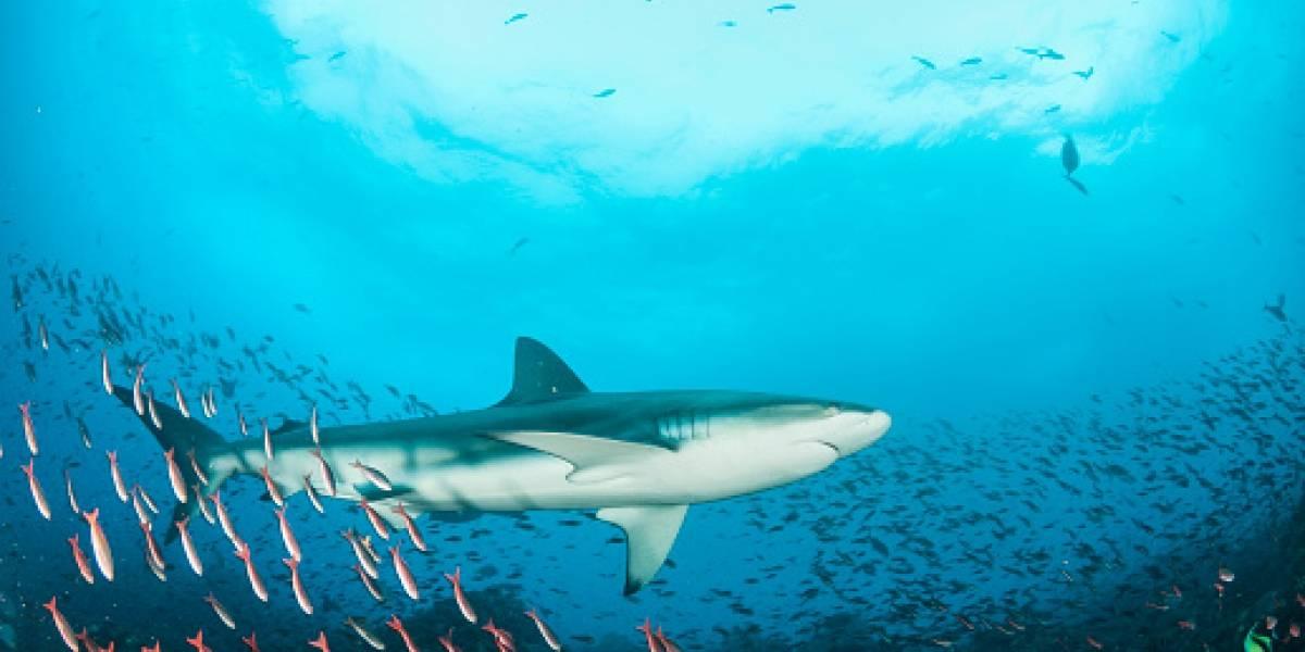Ecuador presenta queja ante China por pesca ilegal en las Galápagos