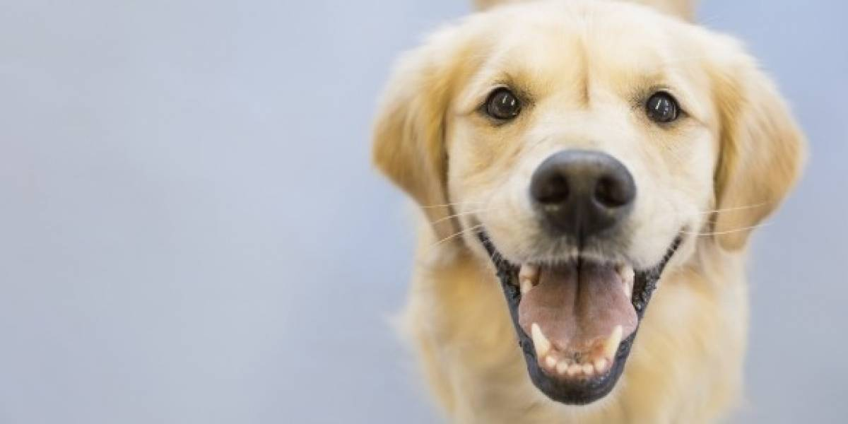 Aprenda a desparasitar su perro con sencillos consejos
