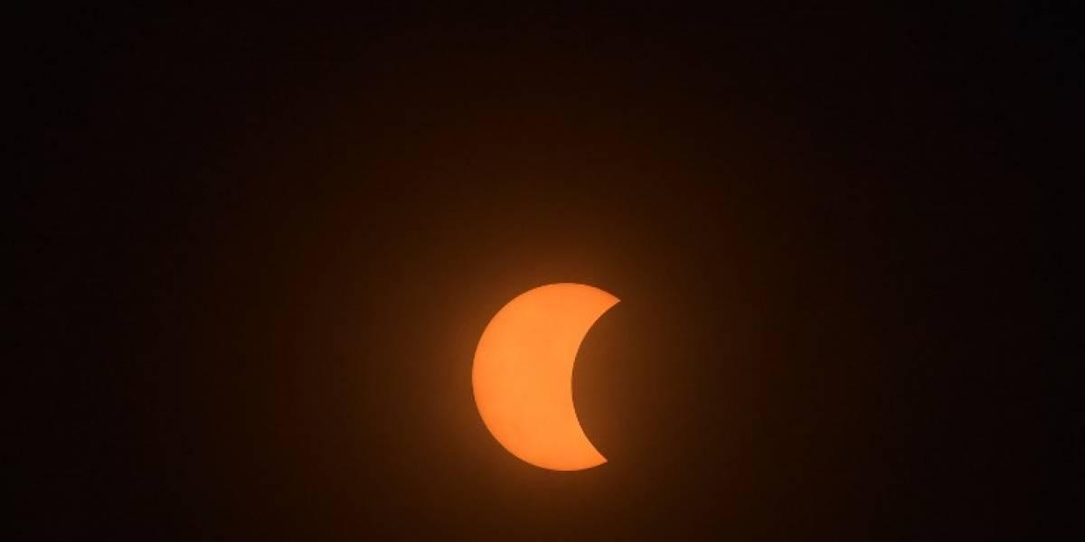 ¿Qué hacen los animales durante el gran eclipse solar?