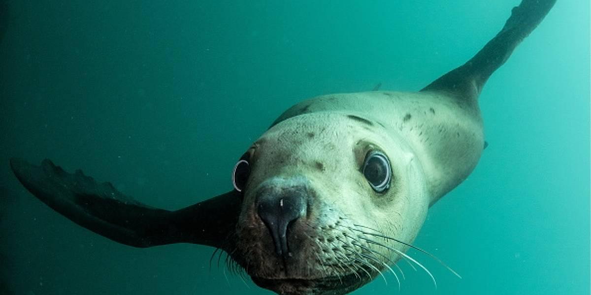 Encuentran lobos marinos en embarcación industrial en El Oro