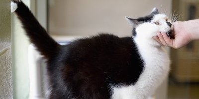 Los gatos buscan comunicarse con nosotros ¡usando su cola!