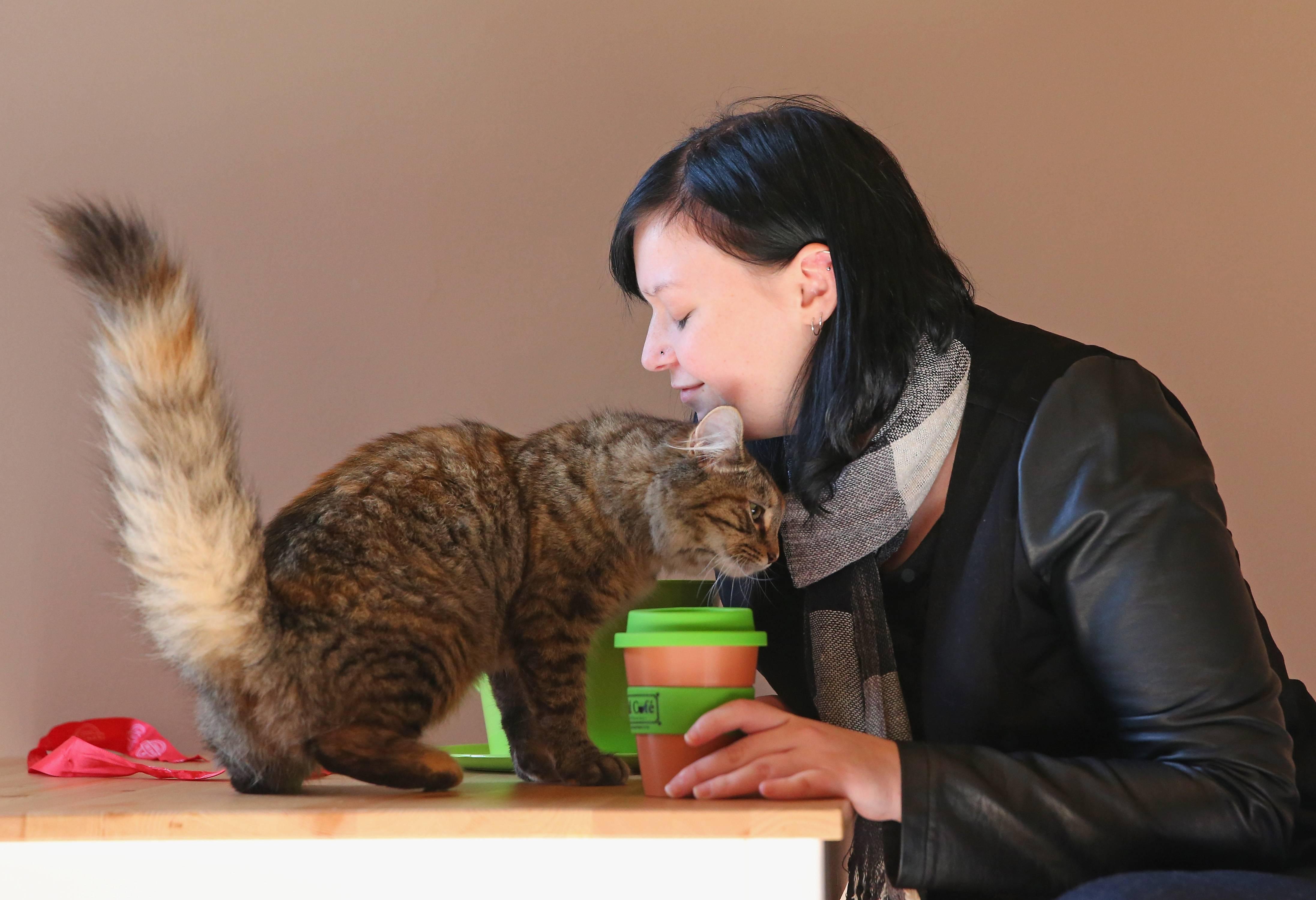 Los gatos y las personas tienen una relación complicada.