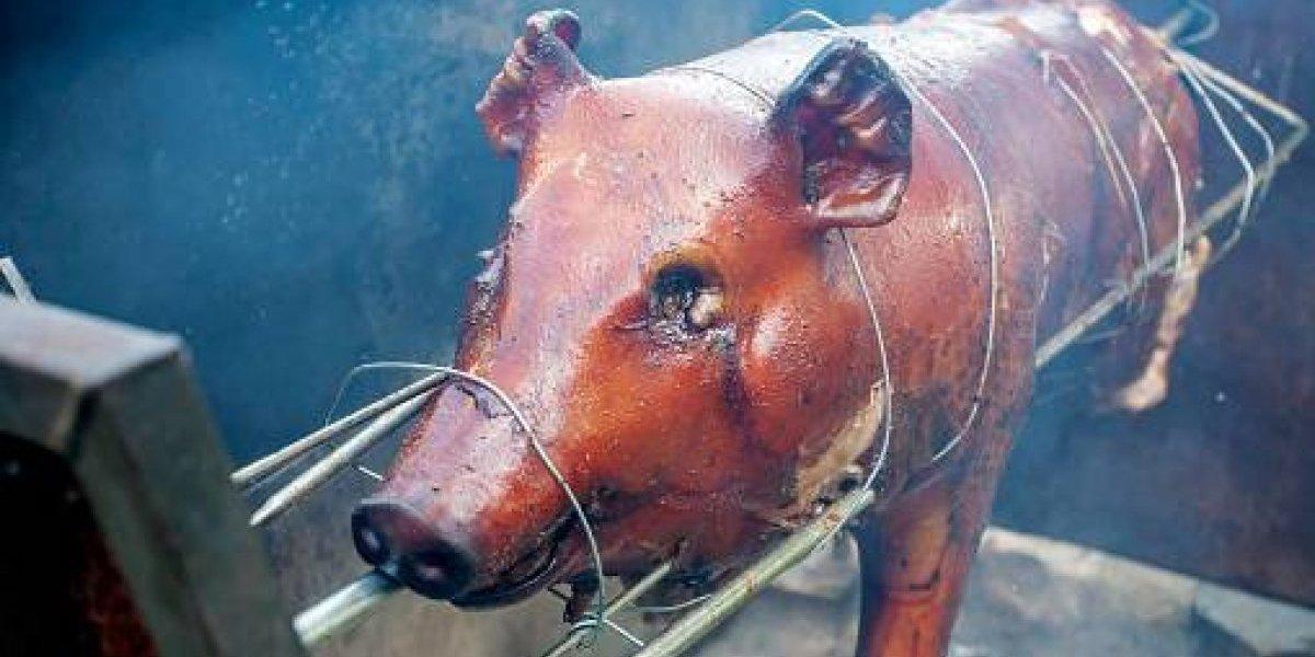 Nace primera marca de cerdos exclusiva para lechoneras