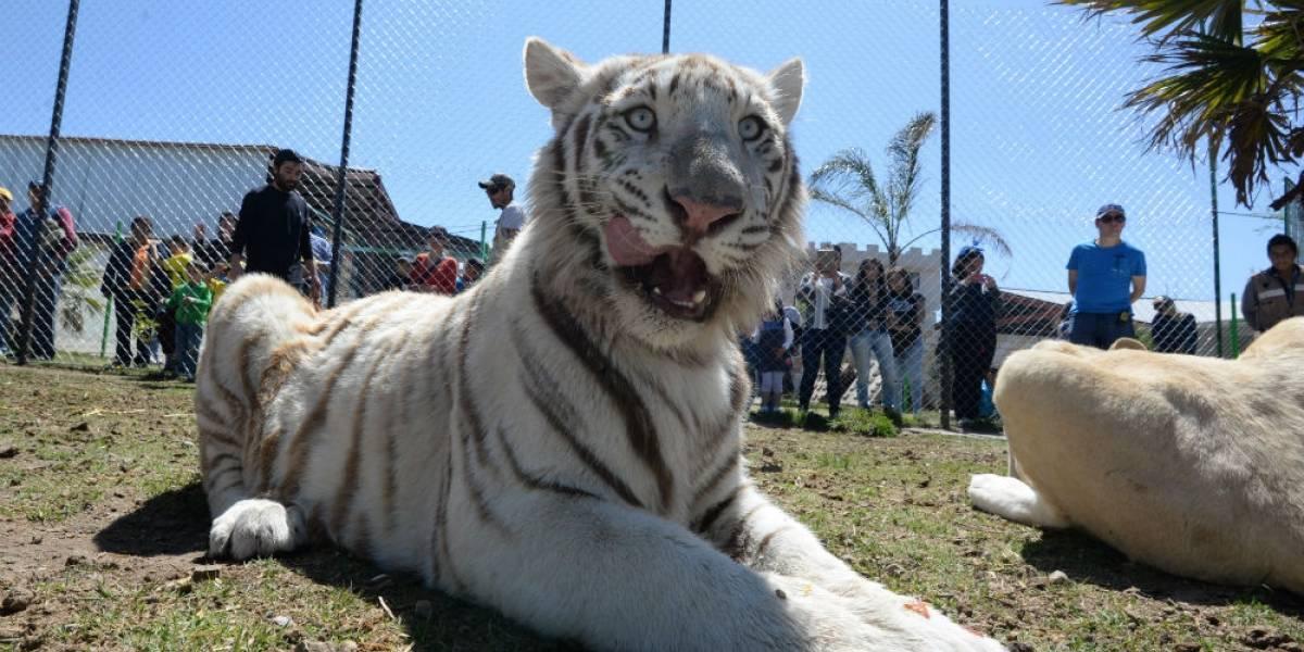 FOTOS: Así es la vida de animales de circo rescatados