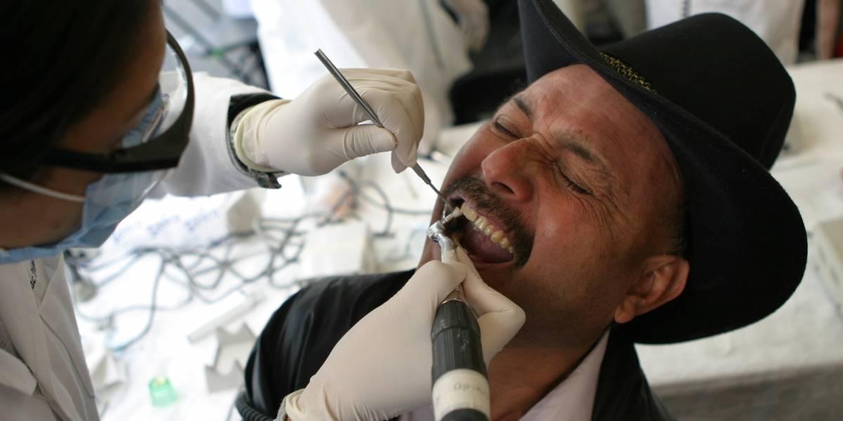 Piezas dentales podrían regenerarse a partir de huesos de cerdo y res