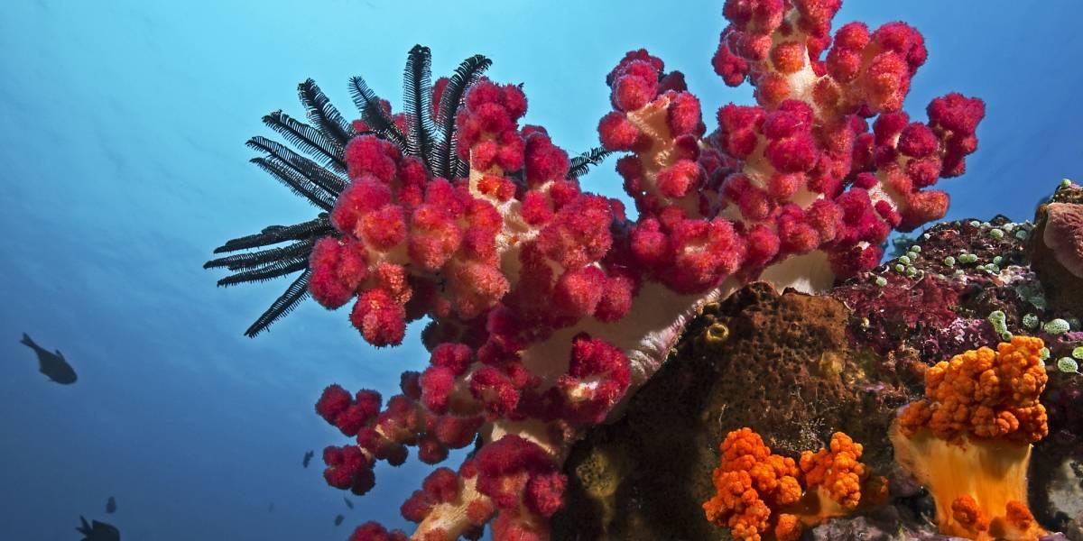 Dueño de acuario en P.R. se declara culpable por tráfico de corales y arrecifes
