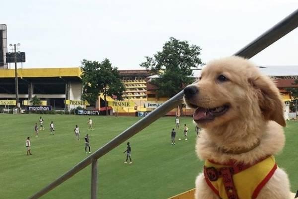 Así ha crecido Coloso, la mascota de Barcelona SC