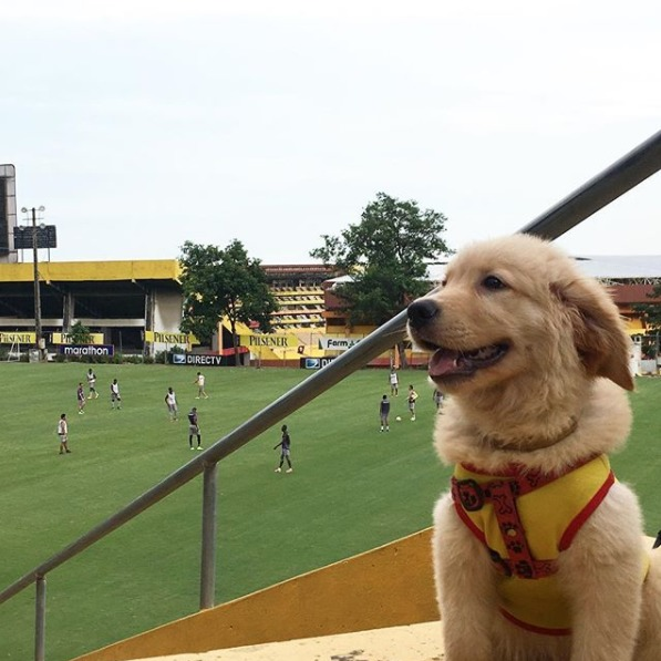 Instagram Coloso