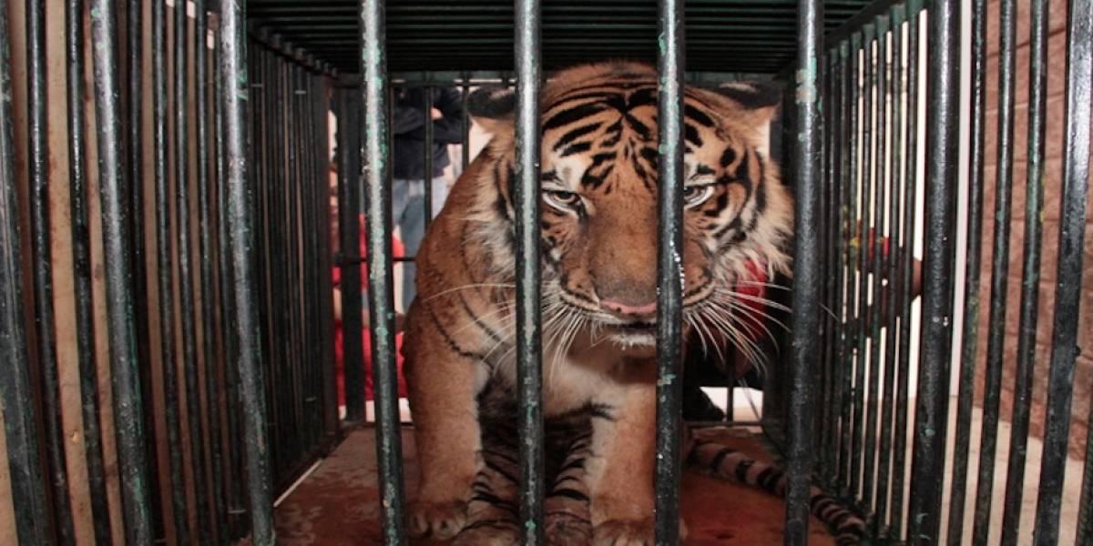 Descubren zoológico clandestino en hogar de Ciudad Juárez
