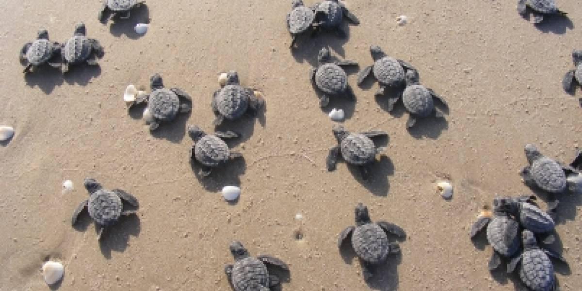 Profepa rescata a 117 tortugas de criadero en Chiapas