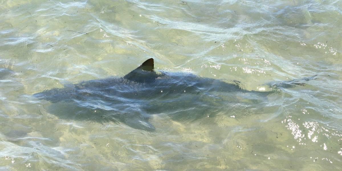Tiburón muerde niño en playa de Florida