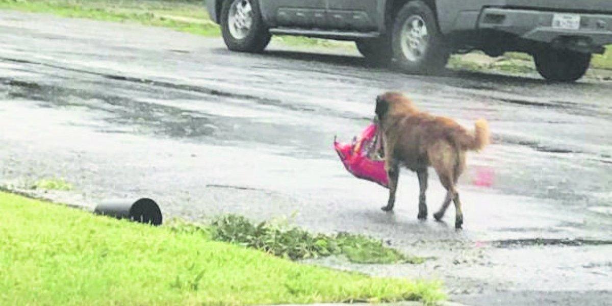 """""""Otis"""", el perro texano que escapó del huracán"""