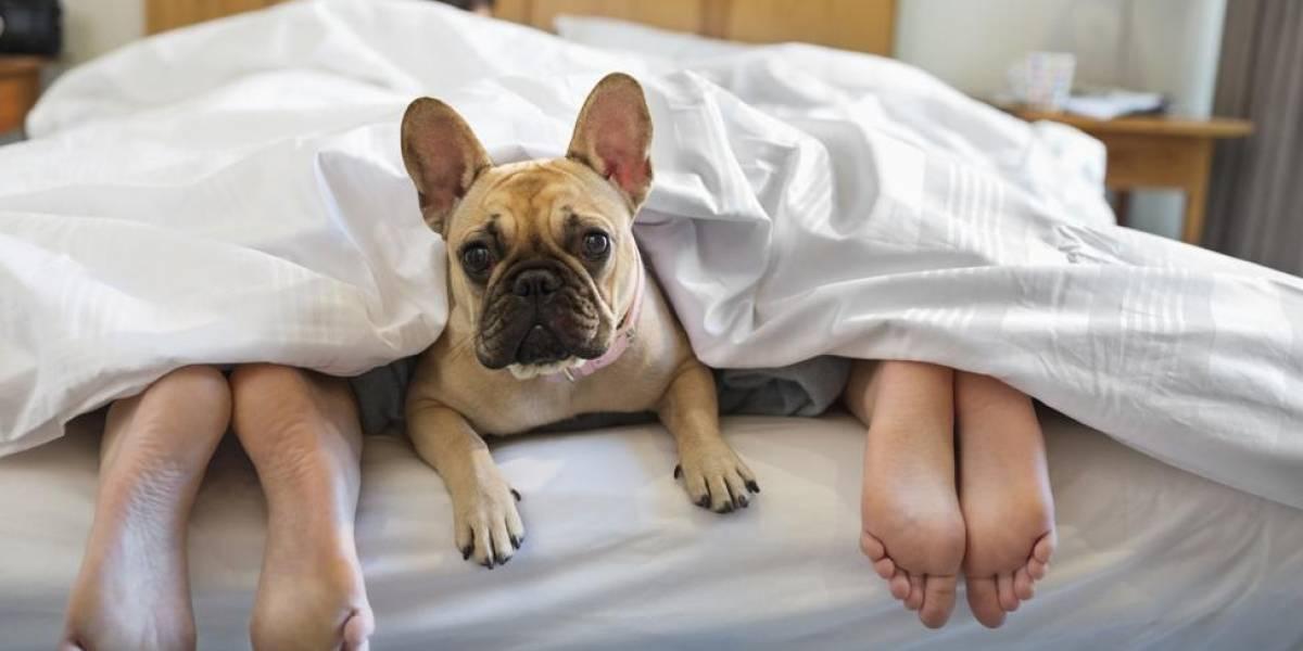 Cuidado de mascotas moverá más de US$800 millones