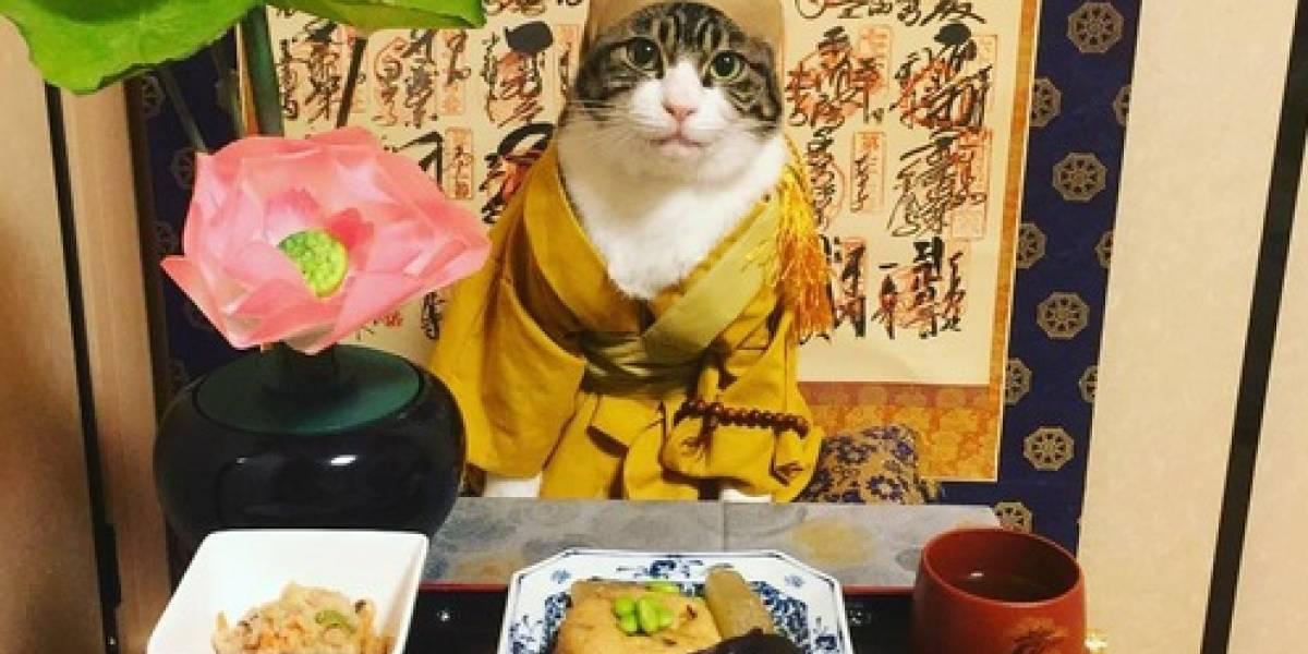 Conheça Maru, o gato mais bem-vestido e estiloso do Japão