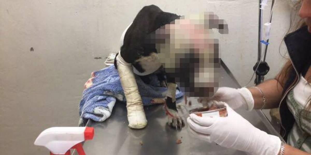 Detienen en Ecatepec a hombre que golpeó y quemó con un soplete a un perro