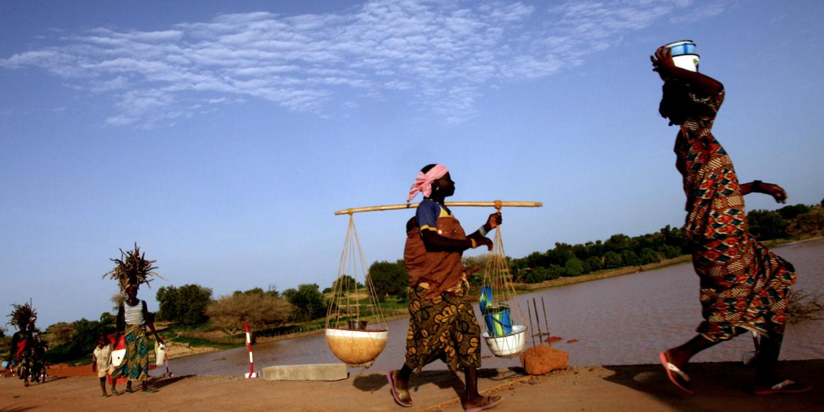 """""""Supercereal"""" africano podría destronar a la quinua"""