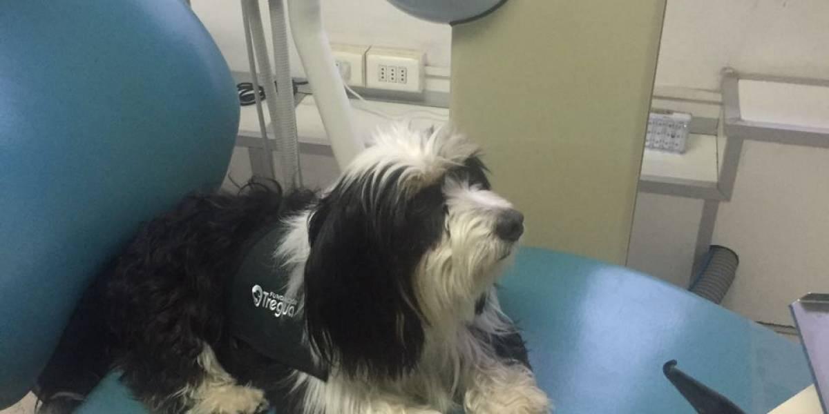 Elvis: el perrito terapeuta que acompaña a los niños en el dentista